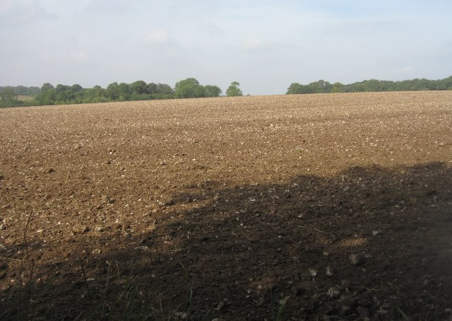 Fields north of White Lane byway