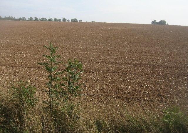 Fields north of Ashe Warren Farm