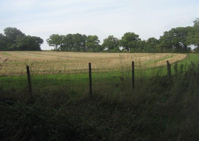 Field by Kingsdown Wood