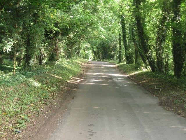 Rural lane - Ashe Warren