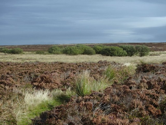 Moorland in the upper basin of Barr Brook