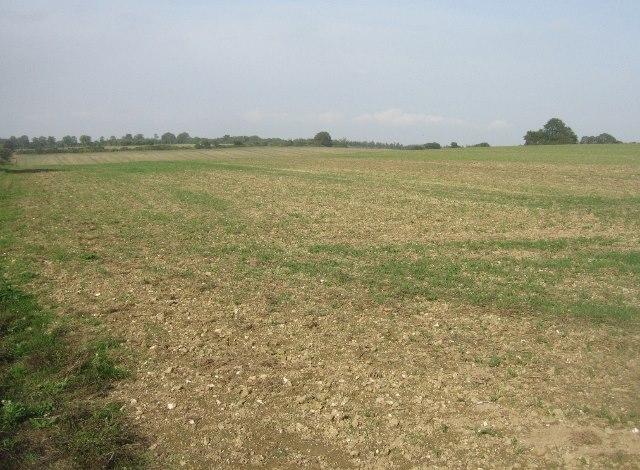 Fields north of Ashe Warren Lane