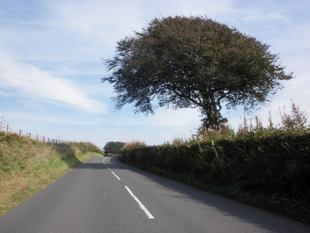 Isolated beech tree, on the B3358