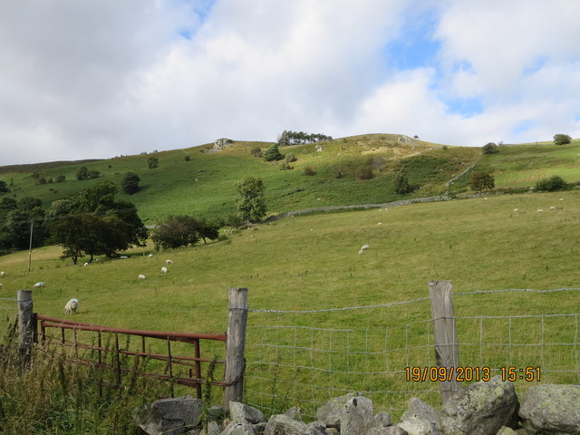 Sheep pasture in Cwm Blowty