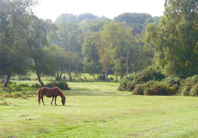 New Forest and Pony