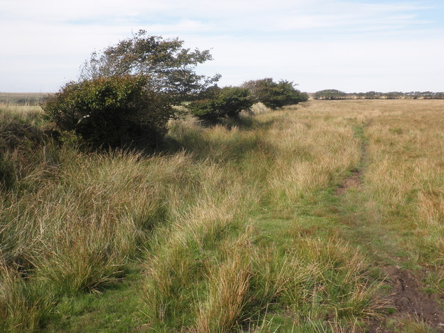 Field boundary on Broad Mead