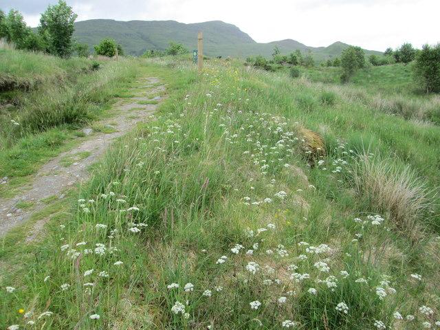 Crianlarich Community Nature Reserve