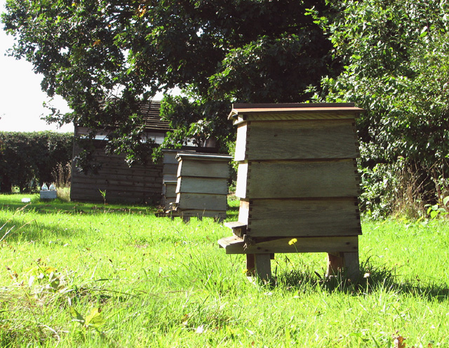 Beehives in apiary, Rockland St Mary