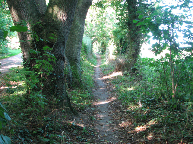 Path to Rockland St Mary