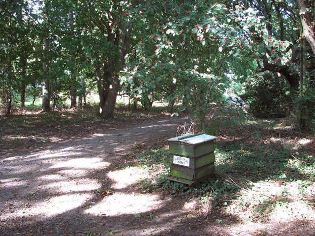 Driveway to apiary
