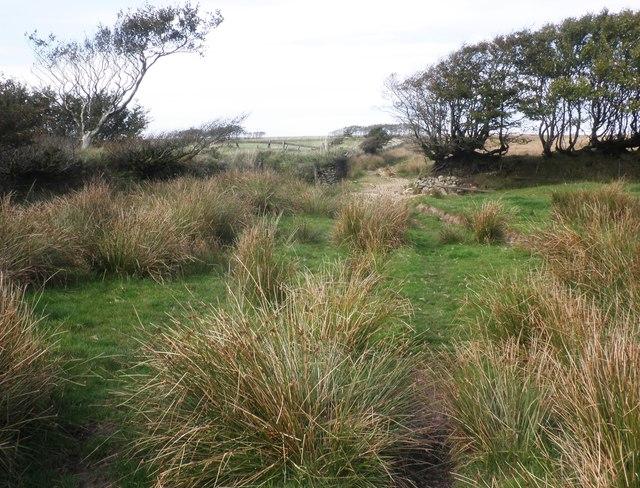 Tarka trail on Broad Mead