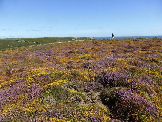 Wonderfully coloured heathland
