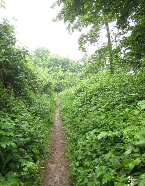 Footpath near Elmlea schools