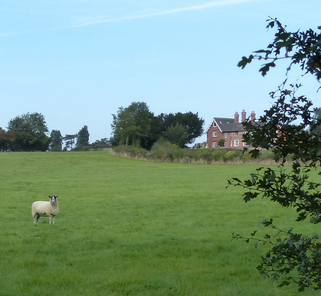 Sheep pasture at Yew Tree Cottage