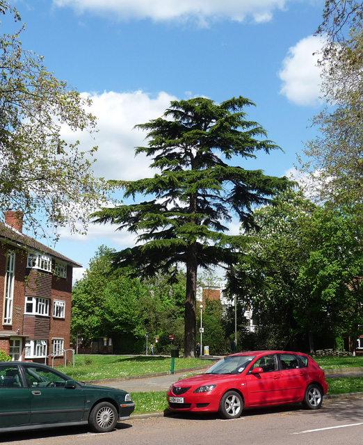Conifer, Brackley Road