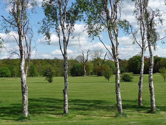Silver birches, Beckenham Place Park