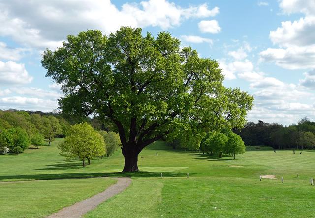 Oak, Beckenham Place Park