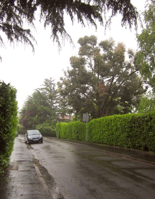 Elmlea Avenue in the rain