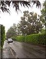 ST5676 : Elmlea Avenue in the rain by Derek Harper