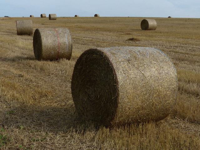 Straw bales on farmland near Folly Bridge