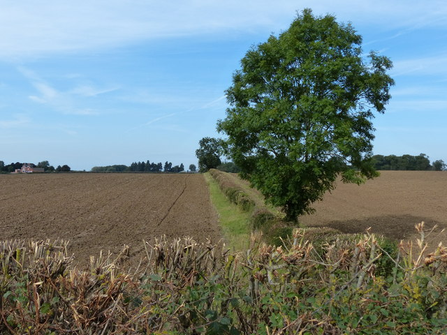 Fields and hedges