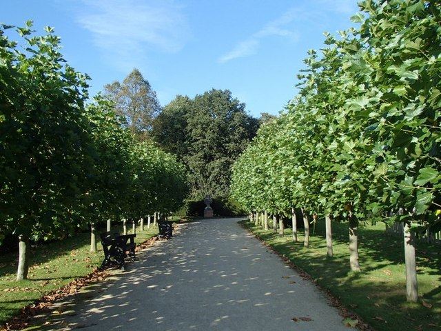 Tree lined walkway in the Rufford Abbey estate