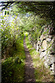 SW4223 : Coastal Path near St Loy's Cove by Peter Skynner
