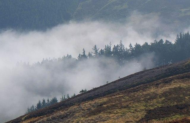 Cloud amongst the trees, Kailzie Hope