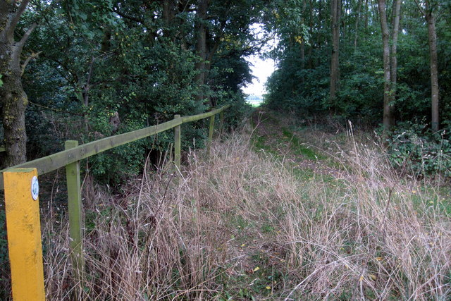 Bridleway through the grove