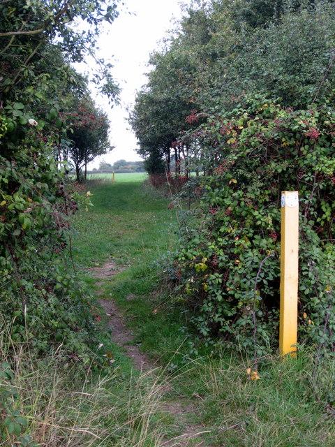 Path through the grove towards Astwood