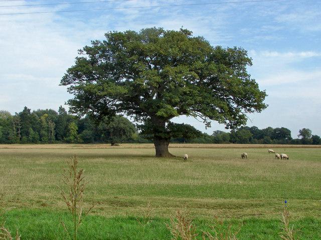 Farmland near Binfield