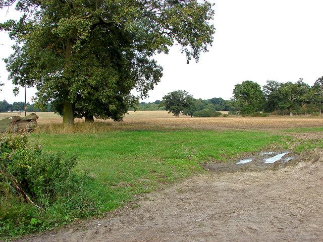 Fields near Binfield