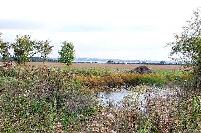 Pond at Boreham and Profit's Farm