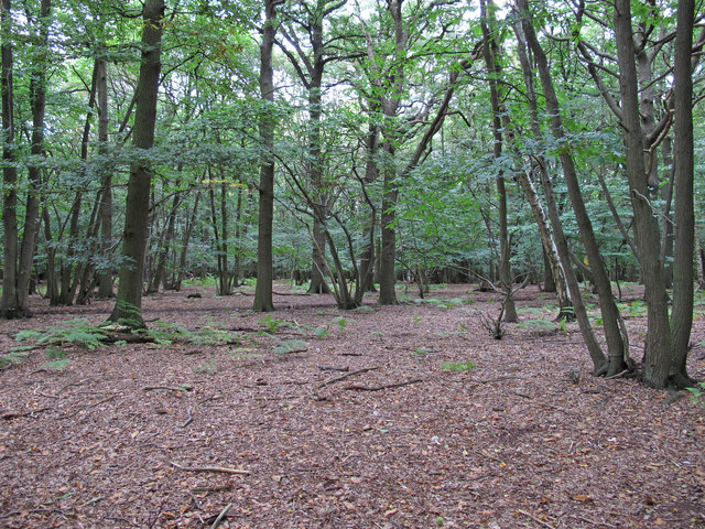 Stoneymore Wood, Writtle Forest