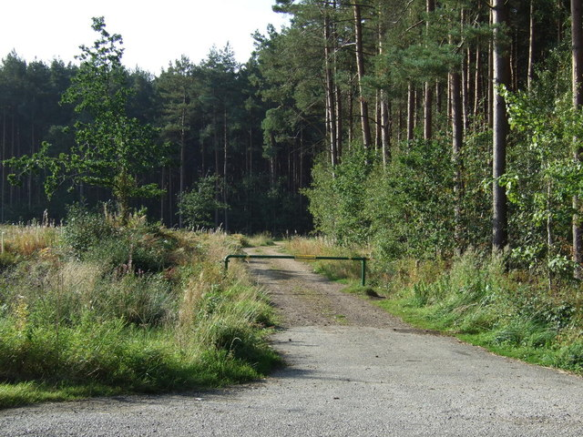Track into Warren Wood