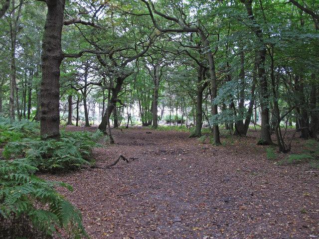 Bridleway in Deerslade Wood, Writtle Forest