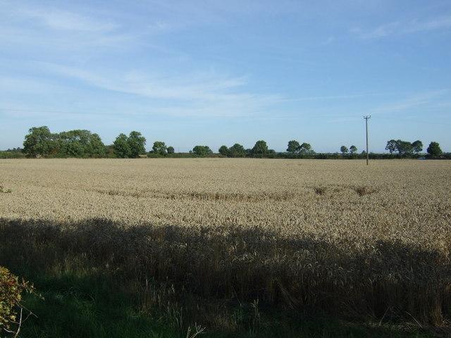 Crop field near Boucherette Farm