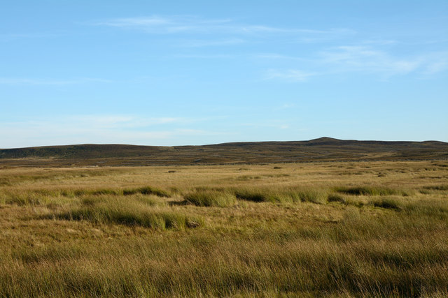 Rushes on moorland beside road to Sleightholme