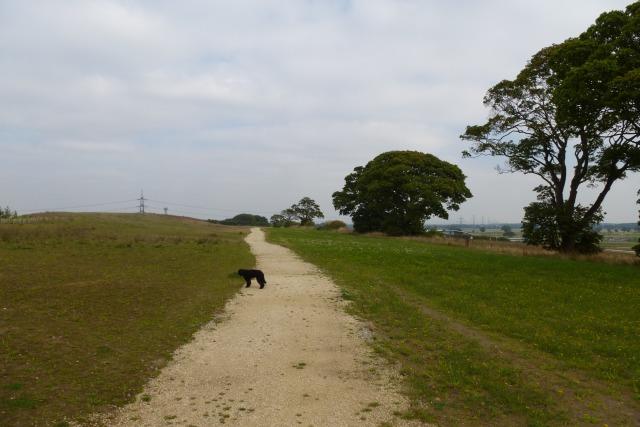 Path on Kimberlow Hill