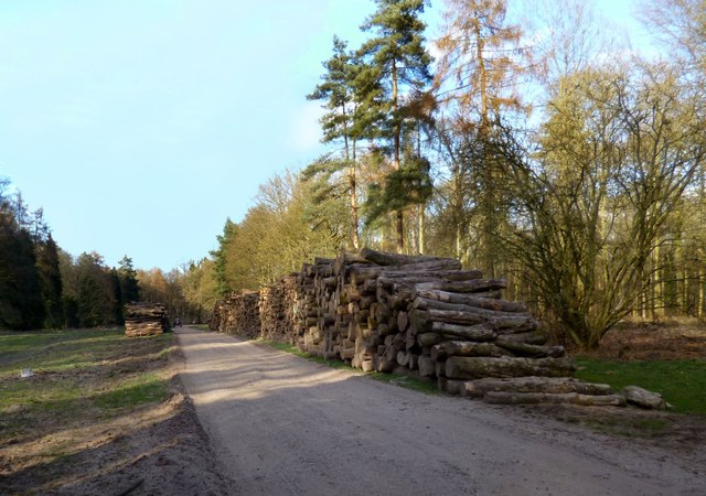 Logs by The Blackground