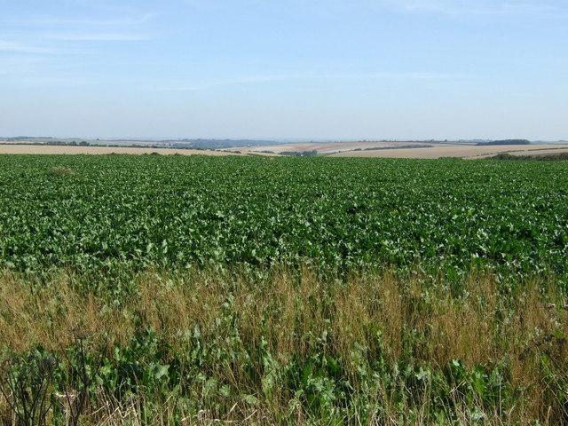 Crop field off Bluestone Heath Road