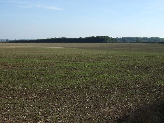 Farmland off Bluestone Heath Road