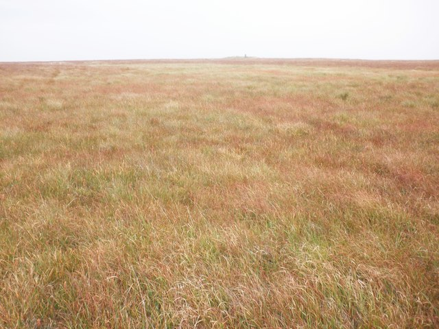 Boggy grassland, on the 'Chains'