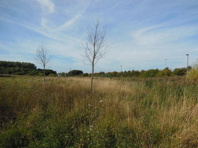 Spare land off John Newton Way, Hull