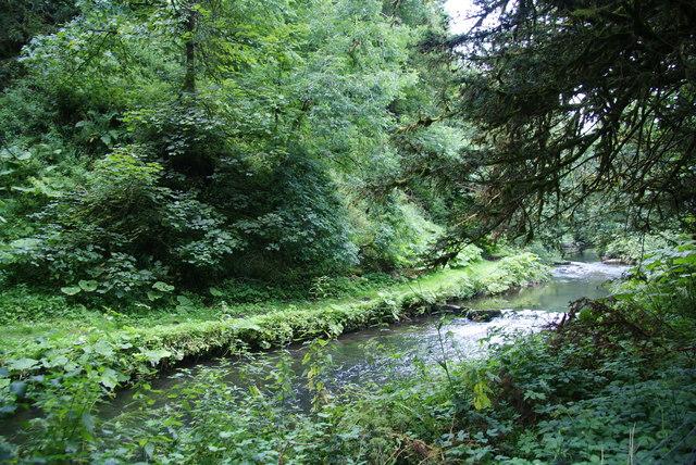 The River Dove in Morson Wood