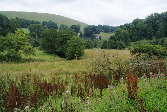 Mixed vegetation near the head of Wolfscote Dale