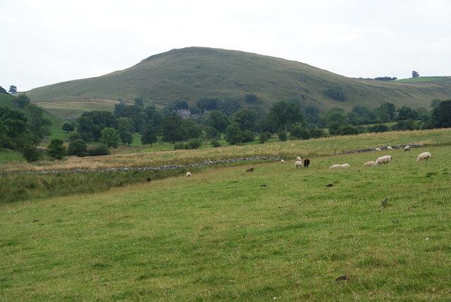 Sheep near Beresford Dale