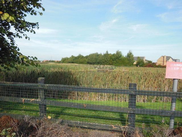A pond off Ashcombe Road, Kingswood