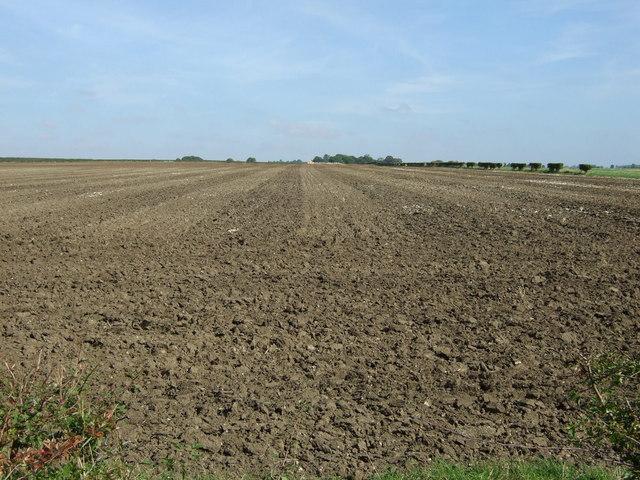 Ploughed field, Furzehills