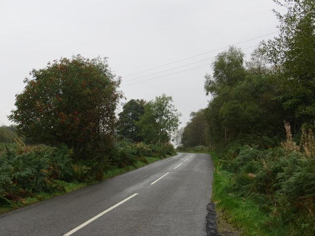 Road (B793) at Auchenlosh Wood